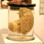 לשלוט במוח של הלקוח